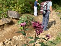 登山口に花 - Naturfreude