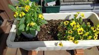 ビオラ植え直し - うちの庭の備忘録 green's garden
