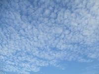 羊雲と白い彼岸花(秋二景) - 海風通信