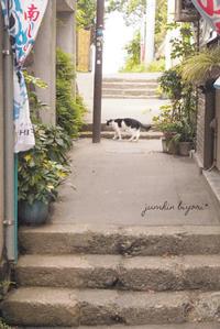 江ノ島さんぽ2 - jumhina biyori*