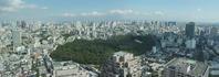 2019.9.25東京・白金の森ルリシジミ2019.10.3 (記) - たかがヤマト、されどヤマト