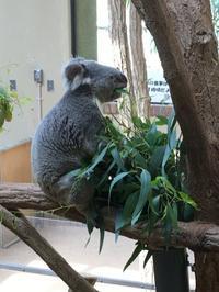 王子動物園の他の動物たち - きょうのはなwithくるみ~愛犬写真日記~