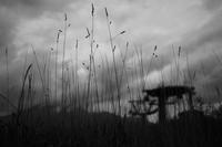 初秋に揺れる - 旅する       memephoto