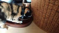 三毛猫ひかちゃん-88- - 殿様の試写室
