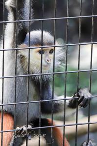 よこはま動物園ズーラシア2019年9月23日 - お散歩ふぉと2