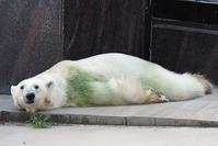 10月4日(金)ワーカーホリック - ほのぼの動物写真日記