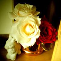 「切実な」新月のお願い - Miemie  Art. ***ココロの景色***