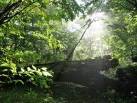 森歩き♪<男池~ソババッケ・百大登山部> - ワカバノキモチ 朝暮日記