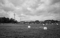 点在する牧草ロールをみた夏 - Film&Gasoline