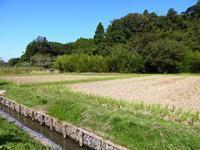 食欲の秋はもうすぐ - 千葉県いすみ環境と文化のさとセンター