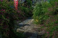 勝念寺の萩 - 鏡花水月