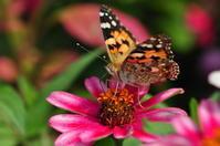 秋のお花と蝶③ - *la nature*