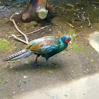 自然文化園 - 365歩のマーチ