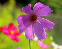 ボタニックガーデンで花や虫 - 星の小父さまフォトつづり