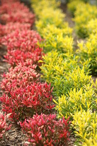 花壇には テランセラ咲く  色づいた   篤人 - 渡部あつし