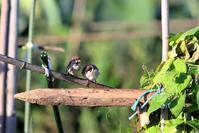 秋の畑より part1 - 綺麗な野鳥たち