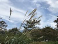 女心と秋の空…なら良いのですが @宮ケ瀬 - よく飲むオバチャン☆本日のメニュー