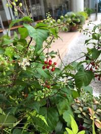 Riego Riego - Gardener*s Diary