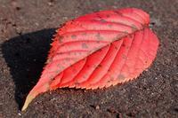紅い葉の季節が身近に迫って来た - 『私のデジタル写真眼』