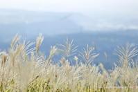 秋の風とグライダー - *Any*