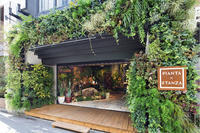 東京都中央区 PIANTA X STANZA さんに大型パルダリウム施工 - ZERO PLANTS / BLOG