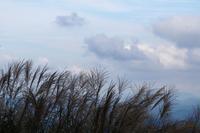 秋のシルエット - ♪一枚のphotograph♪