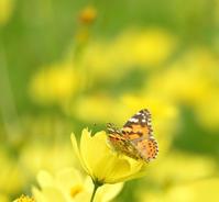 秋のお花と蝶④ - *la nature*