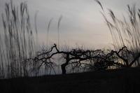 夜の手前 - 旅する       memephoto
