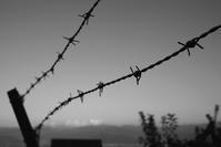 鉄の棘 - 旅する       memephoto