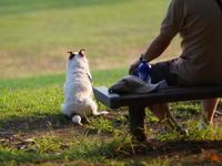 スナップ  愛犬 - エンジェルの画日記・音楽の散歩道