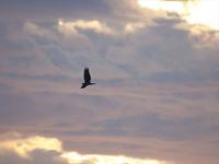 鷹の渡3 - 平さん