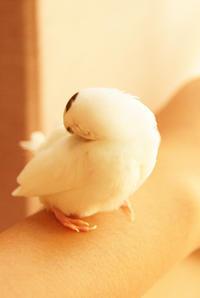ジュウシマツ4歳になりました☆/映画観てきました!(蜜蜂と遠雷) - DOUBLE RAINBOW