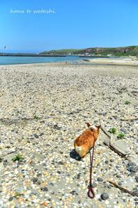 夏の浜辺でハナ散歩 - 礼文島★ハナとわたし