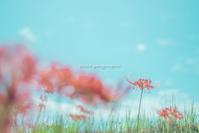 心に花を。。 - Yuruyuru Photograph