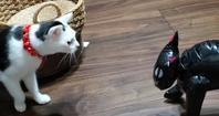 黒猫 - 素人木工雑貨と犬猫日記