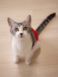 猫のお留守番 ルッコラちゃん編。 - ゆきねこ猫家族