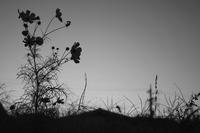 夕暮れの凛 - 旅する       memephoto