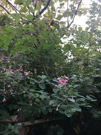 梨木神社で萩を愛でる日 - 京都西陣 小さな暮らし