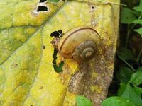 雨の日は、稲刈はお休みになります - 百笑通信 ブログ版