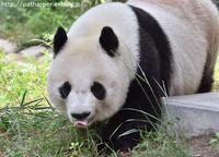 2019年9月王子動物園2その1みゆきさんオヤツタイム - ハープの徒然草