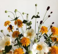 草花が好き - ふたり暮らしの生活向上委員会