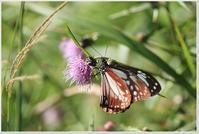 スーパー林道散策 - ハチミツの海を渡る風の音