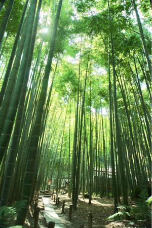 モニター体験のご感想をいただきました♪ - 神戸市垂水区 Petit Lapin~プチ・ラパン~