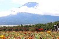 富士山と花畑♪ - 湘南気まま生活♪