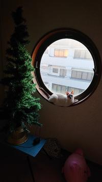 運動会スタート - MINKWIN Cattery &Pretty Aki                    トンキニーズの店