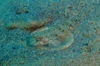19.10.5いつも、多くの課題に向き合って - 沖縄本島 島んちゅガイドの『ダイビング日誌』