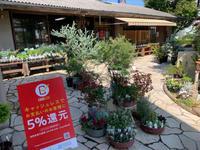 ポイント還元♪♪ - ブレスガーデン Breath Garden 大阪・泉南のお花屋さんです。バルーンもはじめました。
