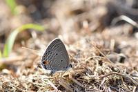 2019年9月27日■大阪府阪南市 - 蝶と自然の物語