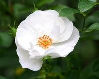 今日は秋バラを羅列で・・・・ - 星の小父さまフォトつづり