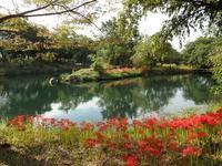 『木曽川水園の秋』 - 自然風の自然風だより